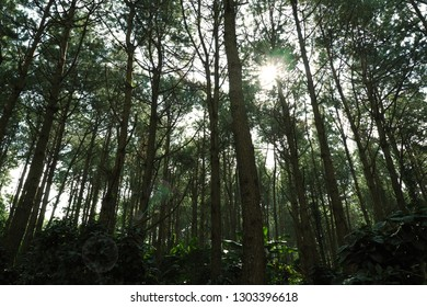 Scenic the green forest with lens flare and rays of sun in summer.