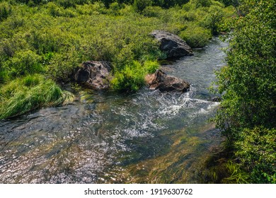 Scenic green landscape with algae in clear water of mountain stream. Green nature background with water plants in transparent water stream among lush vegetations. Underwater grass in mountain brook.