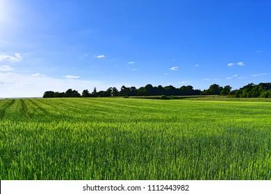 Scenic green landscape in Denmark