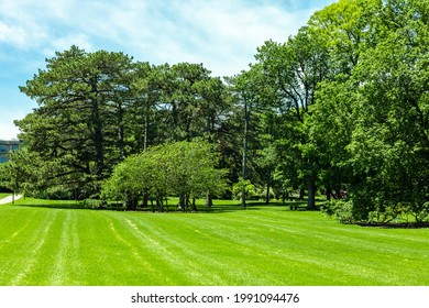 Scenic of green landscape, public outdoor park for leisure and picnic. Beautiful greenery environment, lush field and trees with white clouds in blue sky. Recreation and relaxation place with nature.