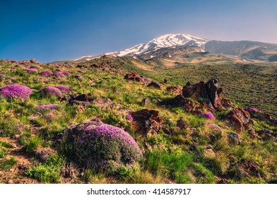 Scenic green meadow with flowers and volcano Damavand in the background, highest peak in Iran