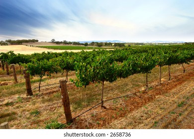 Scenic Green Vines at Dusk