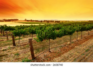 Scenic Green Vines at Sunrise