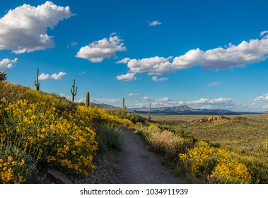 Scenic hiking trail in North Scottsdale AZ with expansive views and spring time desert wild flowers.
