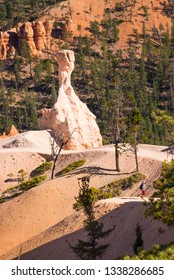 Scenic hoodoos in Bryce canyon national park, USA