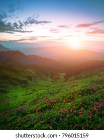 scenic image red spring flowers on slopes carpathian mountains, fabulous panorama morning spring dawn, discover yourself beautiful places