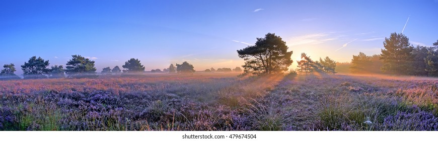 Scenic image of sunrise over blooming pink moorland