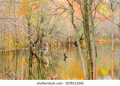 Scenic image in the wetlands with reflections in the water surronded by trees and broken branches.
