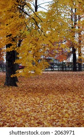 Scenic image of yellow leaves falling off the trees