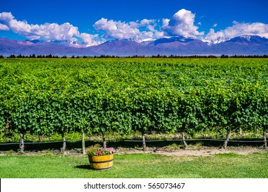 Scenic Landscape with Andes Mountains with Snow and Vineyard on the foreground in Mendoza, Argentina