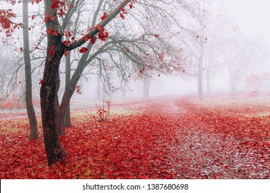 Scenic landscape in autumn foggy weather in park. Trees with red leaves
