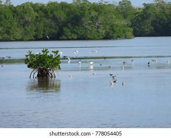 Scenic Landscape Ding Darling Wildlife Refuge Florida