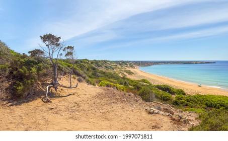 Scenic landscape with dry tree and view of Lara beach. Akamas peninsula, Cyprus