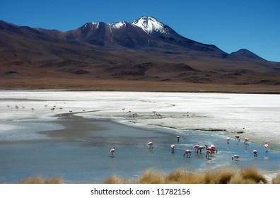 Scenic landscape with flamingos in Laguna on altiplano in Bolivia