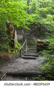 Scenic landscape in the forest with wooden stairs rising up the hill. Green trees. Big fallen tree.