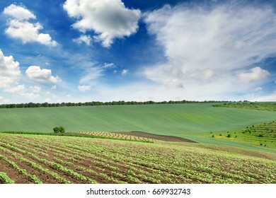 Scenic landscape with a green spring field and a blue sky