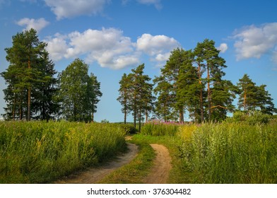 scenic landscape of pines in the field