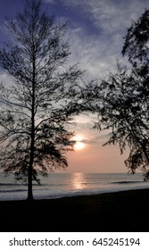Scenic landscape of tree silhouettes on beach background at dawn