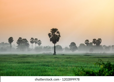 Scenic Landscape view in morning Sunrise and the mist in winter Landscape Green rice field and sugar palm plantation, Countryside Nong khai Province, Thialand.