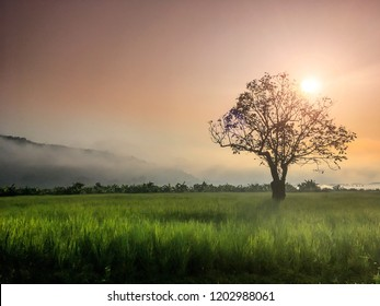 Scenic Landscape view in morning Sunrise and the mist in winter Soft light to Silhouette Alone tree in green rice field with fog and mountain background, Countryside Nong khai Province, Thialand.