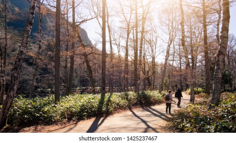 Scenic landscape view of nature beautiful forest in fall with bright sun shining through the trees and tourist walking on the way at kamikochi park, Japan.