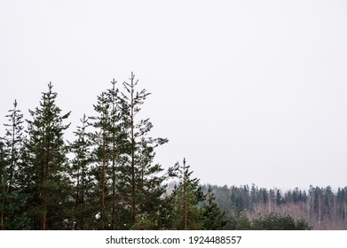 Scenic landscape of winter pine forest. Huge green trees and white snow. Cloudy sky. Beautiful nature. Top view.