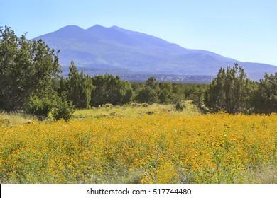 Scenic Lockett Meadow and Arizona Snowbowl Mountain in Flagstaff, Arizona USA