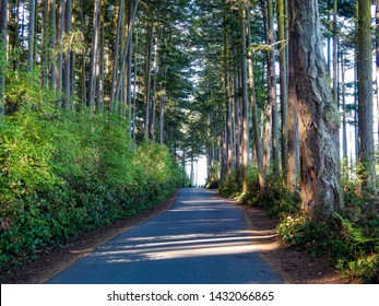Scenic Loop Walking and Jogging Path with Pine Trees, Douglas Fir Trees and Hemlock Trees lining the path as it goes around Washington Park Campground in Anacortes, WA.