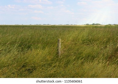 Scenic marsh landscape in Friesland, Northern Germany at the Wadden Sea