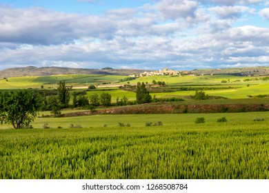 Scenic May agricultural landscape with wheat fields on the Camino de Santiago, Way of St. James, the town of Sansol in Navarre, Spain in the distance