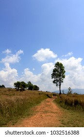 Scenic of men trekking in savannah forest around the grassland area beneath blue sky at Kao Yai National Park ,Thailand. Background concept of travel ,Lifestyle , nature ,outdoor and environment.