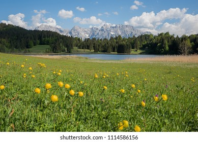 scenic mountain landscape with trollius flowers and view to lake gerold and karwendel mountains, upper bavaria