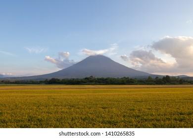 Scenic Mt Yotei with rice paddy Niseko Hokkaido Japan