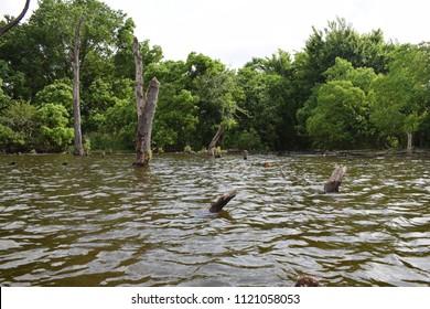 Scenic muddy lake waters  and stumps on a man made lake prefect for largemouth bass fishing.