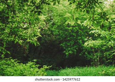 Scenic natural green background in blur behind vivid thickets in sunlight. Beautiful bushes in bokeh behind colorful leaves close-up. Blurred backdrop from rich greenery in sunny day with copy space.