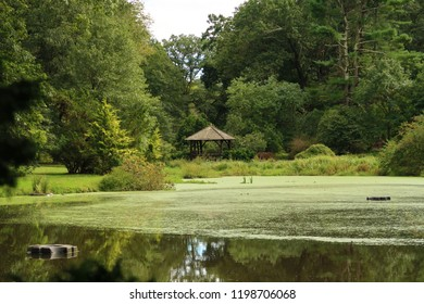 Scenic nature view in a beautiful park. Summer season.