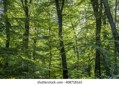 scenic oak forest in Germany fives a harmonic background