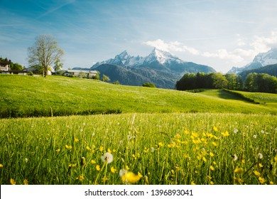 Scenic panoramic view of idyllic alpine mountain scenery with blooming meadows and snowcapped mountain peaks in the background on a beautiful sunny day with blue sky in springtime