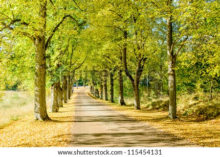 Scenic parkway along straight gravel road in autumn. Sunshine coming in from the side. Leaves under trees.