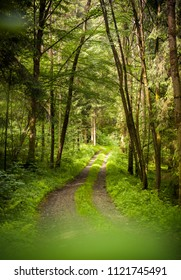 Scenic path way through the forest