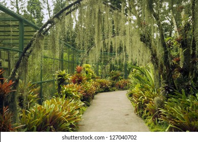scenic pathway under artificial arches with plantation of orchid flowers in famous Singapore Botanical Gardens