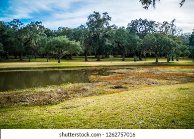 A scenic and peaceful view of the park at AveryIsland, Louisiana