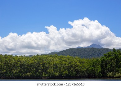 Scenic rain forest view from The Daintree River in Tropical North Queensland, Australia