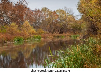 Scenic river in autumn with lush vegetation