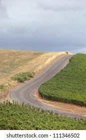 Scenic Road Along a Vineyard