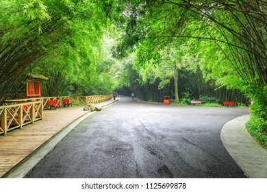 Scenic road intersection in bamboo woods. Amazing road through forest. Beautiful green bamboo trees in park.
