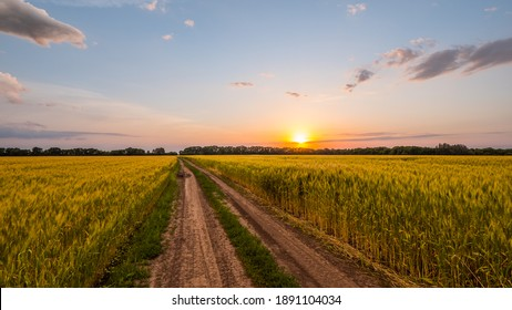 Scenic road in the wheat field
