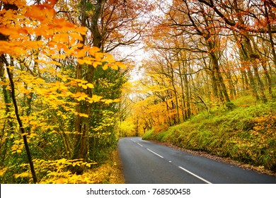 Scenic road winding through golden autumn forest of Dartmoor National Park, a vast moorland in the county of Devon, in southwest England.