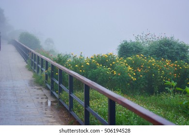 The scenic route in morning mist.