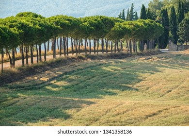Scenic rural landscape of the green hill near maritime pine trees a long the road in the natural park of Tuscany, Italy. Fantastic outdoor photography.